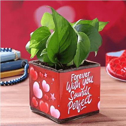 forever money plant