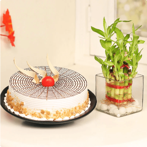 lucky bamboo and butterscotch cake combo
